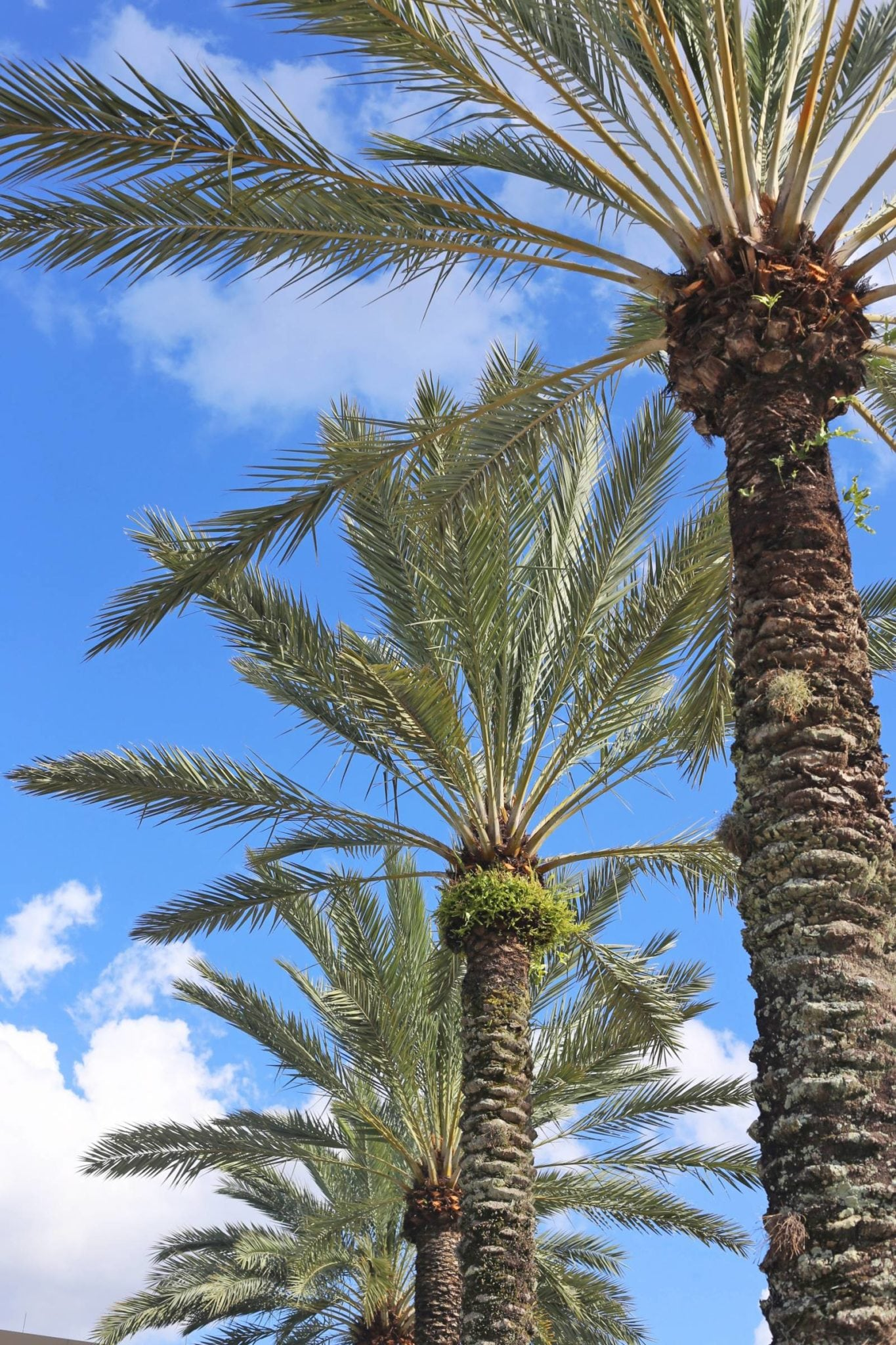 what to do in orlando | Living in orlando | Mash Elle beauty blogger | palm trees | Florida
