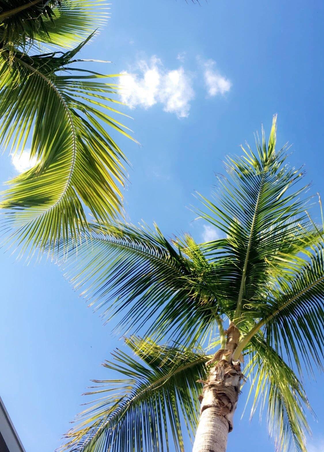 Mash Elle lifestyle blogger | St. pete beach | beauty blogger Mash Elle | black hat | plants | beach house